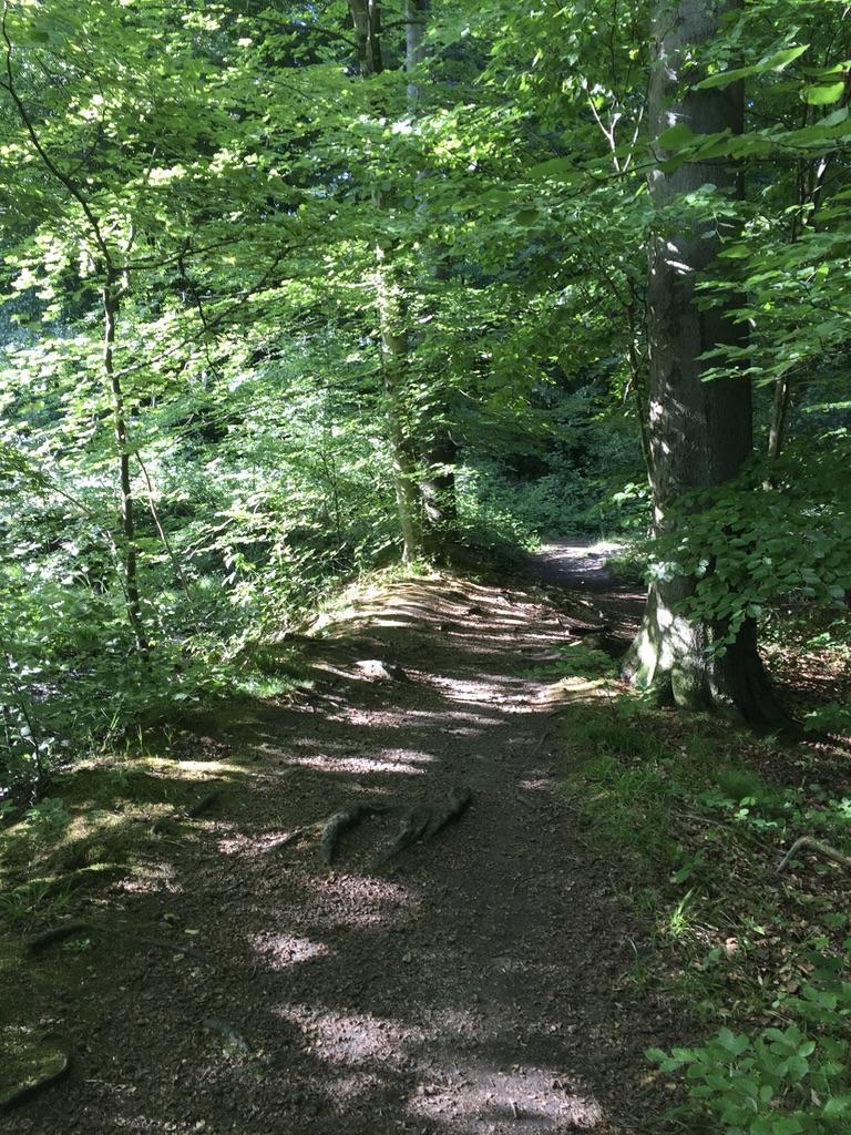 Sonnenbefleckter Pfad im Wald